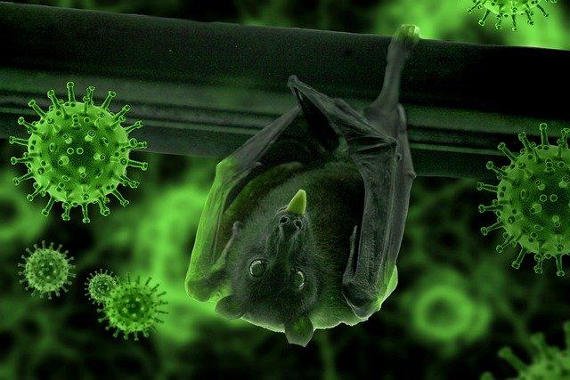 Corona Virus And Bat Evolved Together
